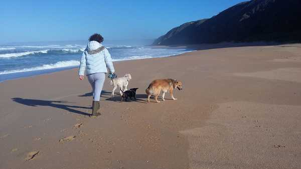 Woman walking on beach with dogs